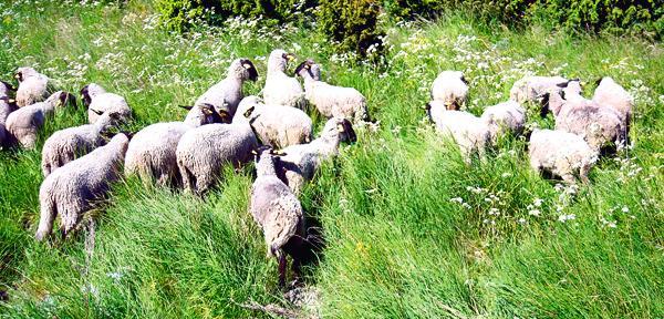lambad Vilsandilt