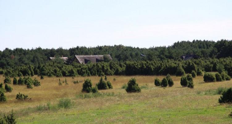 Saaremaa kadakad
